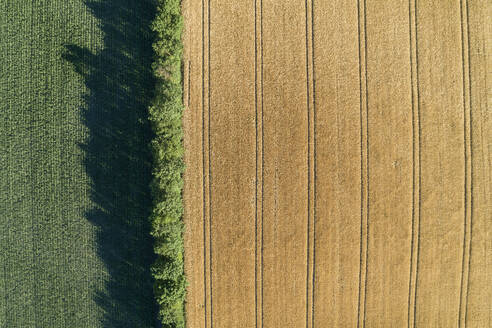 Germany, Bavaria, Franconia, Aerial view of corn field and trees - RUEF02585