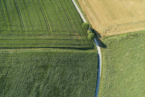 Germany, Bavaria, Franconia, Aerial view of corn fields and dirt road - RUEF02591
