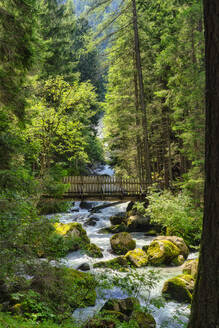 Italy, Trentino, Genova Valley, Forest with Sarca river and footbridge - LOMF00972