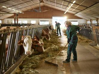 Female farmer working in cow house on a farm - CVF01564