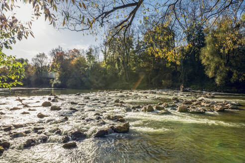 Isar river in the Northern English Garden in autumn, Oberfohring, Munich, Germany - MAMF01085