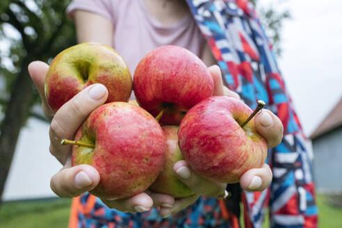 Womans' hands offering apples, close-up - EYAF00921