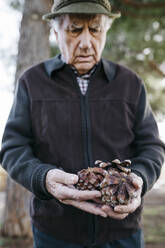 Old man looking at pine cones in his hand - JRFF04123