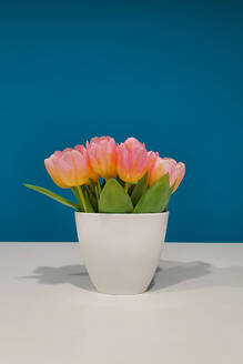 Germany, Bunch of pink tulips in white vase - NGF00544