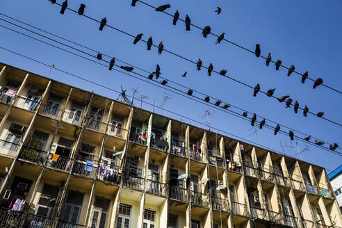 Low angle view of pigeons resting on electrical wires above an apartment building. - MINF13484