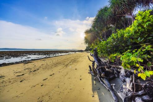 Indonesia, Bintan, Tropical beach - THAF02771