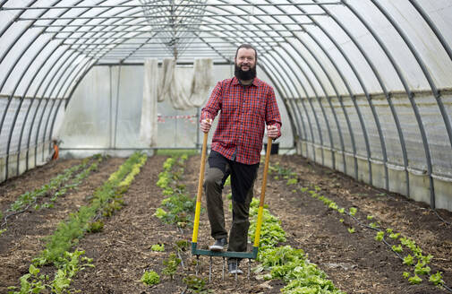 Man growing lettuce in a greenhouse, using a digging fork - FLLF00413