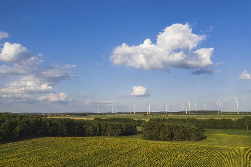 Germany, Brandenburg, Drone view of sunflower field in summer with wind turbines in distant background - ASCF01091