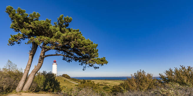 Germany, Mecklenburg-Western Pomerania, Coastal tree against clear blue sky with Dornbusch Lighthouse in background - WDF05811
