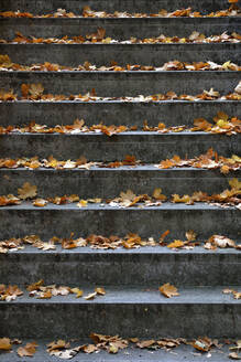 Germany, Stone steps covered in fallen autumn leaves - AXF00836