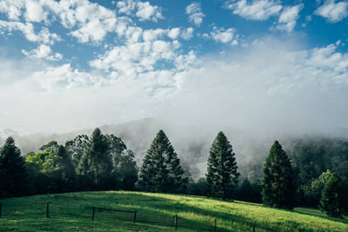 Tranquil scene fog break over sunny green trees Taree Australia - CAIF24200