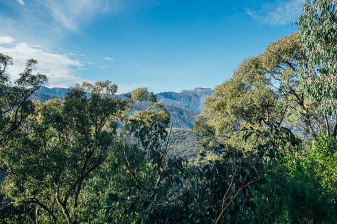 Sunny tranquil view trees and mountain Australia - CAIF24212