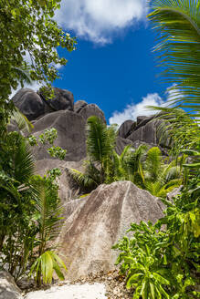 Seychelles, Granite boulders at Source dArgent - MABF00559