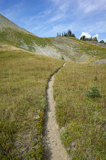 View of the Pacific Crest Trail in alpine meadow, Goat Rocks Wilderness, Gifford Pinchot National Forest, Washington - MINF13890