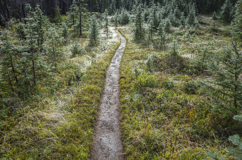 We and muddy hiking trail after mountain storm, lush subalpine meadow in distance, Mt. Adams Wilderness, Washington, along the Pacific Crest Trail - MINF13899