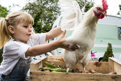 Close up of blond girl holding white chicken flapping it's wings. - MINF13977