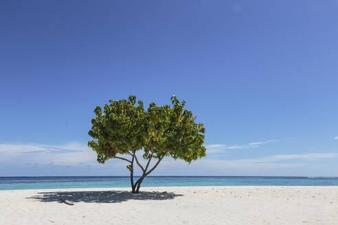 Single tree on sunny, tranquil remote ocean beach under blue sky, Maldives - HOXF05066