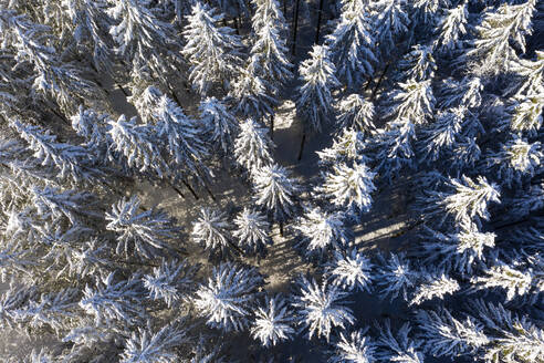Germany, Bavaria,Dietramszell, Drone view of snow-covered spruce forest - LHF00775