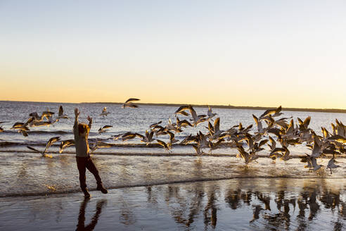 A young boy and a flock of seagulls on a beach - MINF14051