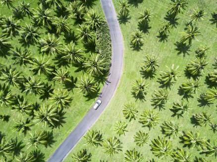 Aerial shot of silver car driving through palm trees - CAVF76192