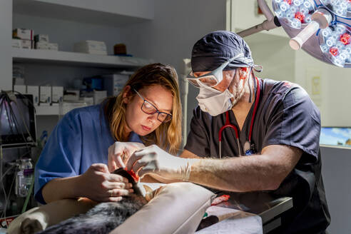 Veterinarian and assistant in a surgery in clinic - DLTSF00587