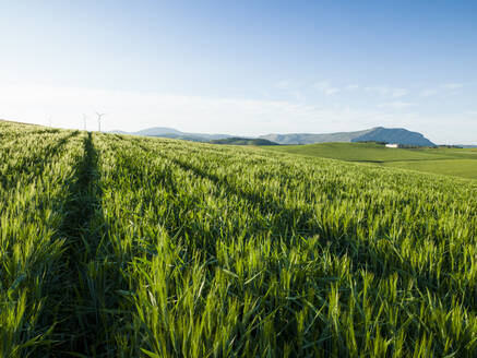 Agricultural landscape in Ardales, Malaga, Spain - CAVF76638
