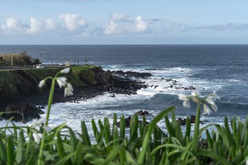 Rocky coastline, Sao Miguel Island, Azores, Portugal - AFVF05672