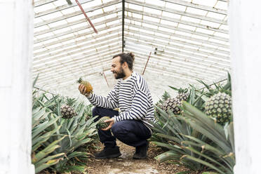 Smiling man in greenhouse holding pineapple - AFVF05817