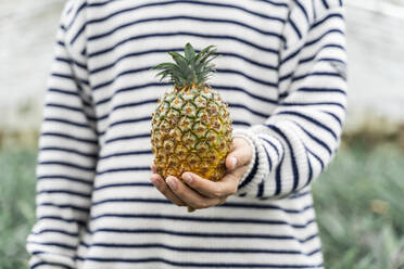 Close-up of man in greenhouse holding pineapple - AFVF05820
