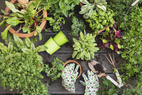 Planting of various culinary herbs and vegetables - GWF06586
