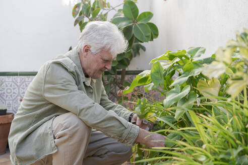 Senior man caring for plants on terrace - AFVF05885