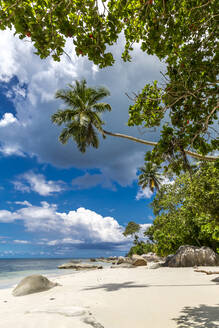 Seychelles, Mahe, Palm trees at Beau Vallon Beach in summer - MABF00568