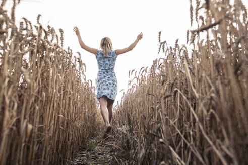 Back view of excited woman walking barefoot in a wheat field - WFF00292