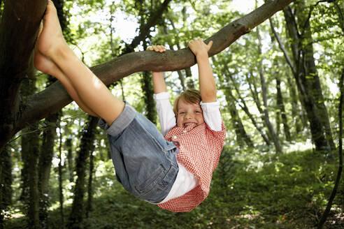 Happy boy climbing tree in forest - AUF00197