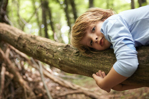 Portrait of serious boy lying on log in forest - AUF00200