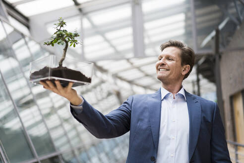 Businessman watching bonsai grow in transparent box - JOSEF00151