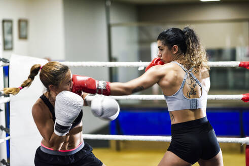 Female boxer hitting her opponent while sparring in the ring of a boxing club - JSMF01516