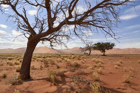 Namibia, Bare tree in Namib Desert - VEGF01830
