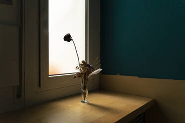 Withered flowers in a vase at the window - AFVF05942