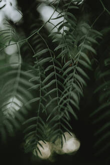 Close-Up Of Leaves - EYF03005