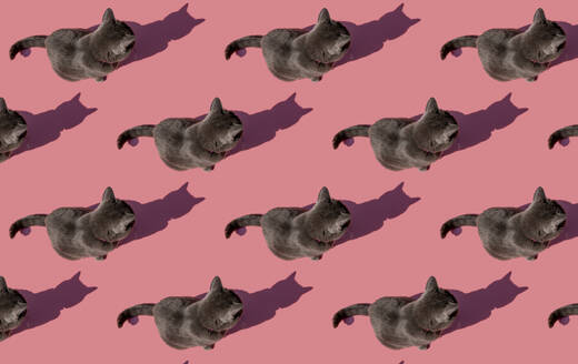 Pattern of Russian Blue cat sitting against pink background - GEMF03537
