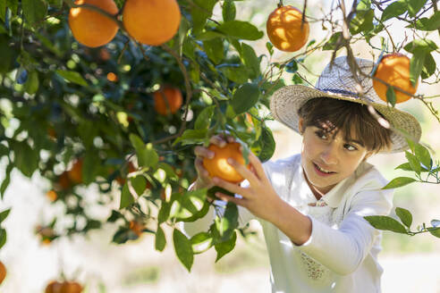 Little girl helping mother with the orange harvest - VSMF00074