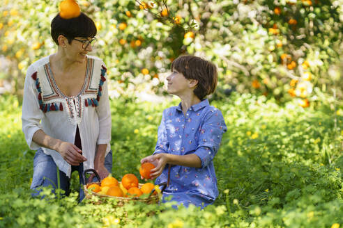 Mother and daughter harvesting oranges in the field - VSMF00137