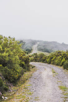 Spain, Cantabria, Countryside dirt road during foggy weather - FVSF00120