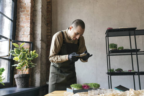 Man taking smartphone picture of microgreens on table - VPIF02277