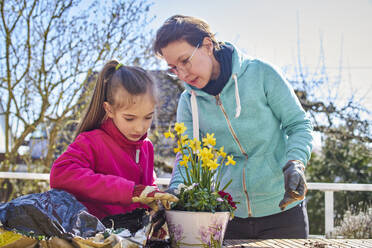 Mother and daughter planting flowers together on balcony - DIKF00444