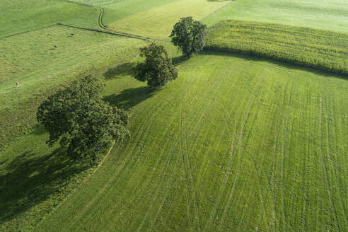 Germany, Bavaria, Drone view of green countryside meadows and cornfield in summer - RUEF02810