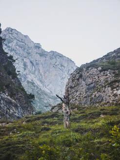Spain, Cantabria, Tree stumpinPicosdeEuropa range - FVSF00137