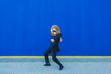Businessman in black suit with meerkat mask moving in front of blue wall - XLGF00040
