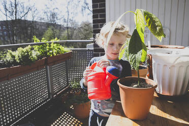 Cute girl watering avocado plant in balcony during sunny day - IHF00335